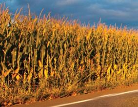 3000 corn heads